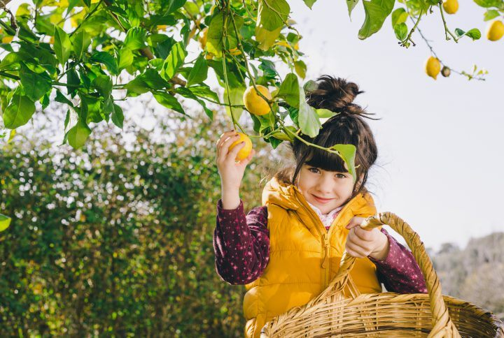 Fair show fruit of all  regions